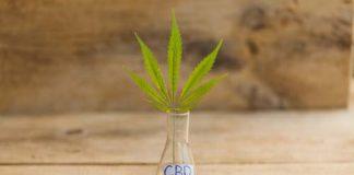 3 podstawowe informacje o olejku CBD